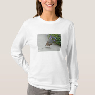 T-shirt cailles