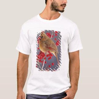 T-shirt Cardinal du nord féminin parmi l'aubépine