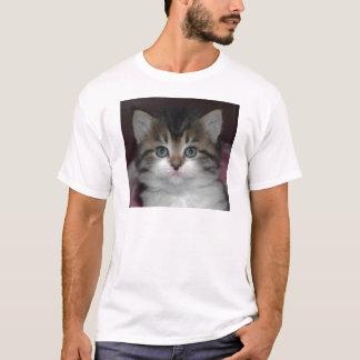 T-shirt Chat tigré sibérien/chaton blanc