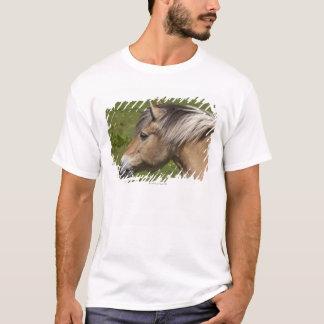 T-shirt Cheval norvégien de fjord
