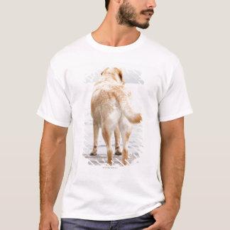 T-shirt Chien sur le dock