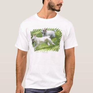 T-shirt Chiens fonctionnant dans la pelouse