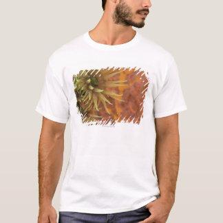 T-shirt Corail orange de tasse