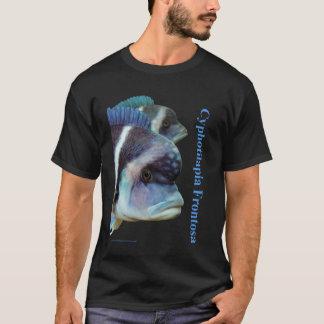 T-shirt Cyphotilapia frontosa