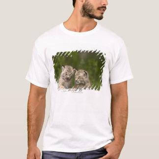 T-shirt Deux chatons de Canada Lynx jouant sur un rondin