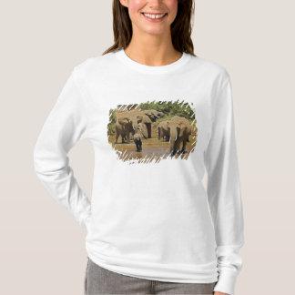 T-shirt Éléphants africains, Loxodonta Africana, Samburu
