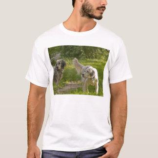 T-shirt Ensemble pour toujours