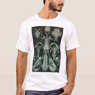 T-shirt Ernst Haeckel - Platodes