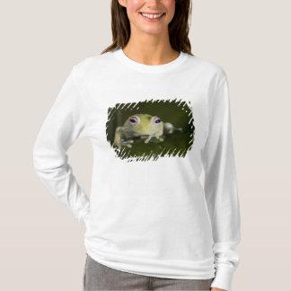 T-shirt Grenouille en verre africaine, viridiflavus de