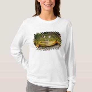 T-shirt Grenouille mugissante creusante africaine,