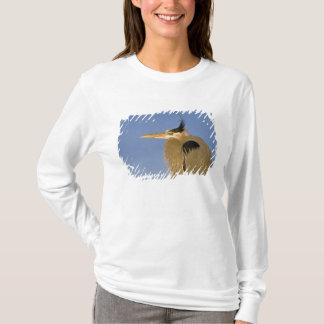 T-shirt Héron de grand bleu, herodias d'Ardea, adulte,