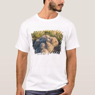 T-shirt hibou neigeux, scandiaca de Nycttea, poussins dans