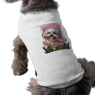 T-shirt Joyeux anniversaire - ShihPoo - Maggie