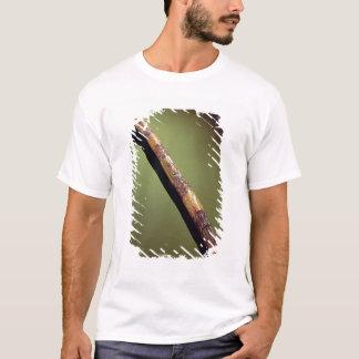 T-shirt La caisse du scribe pour écrire des roseaux