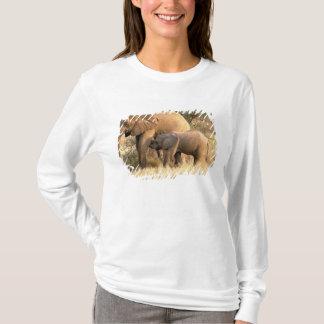 T-shirt L'Afrique, Botswana, Moremi. Soins d'éléphant