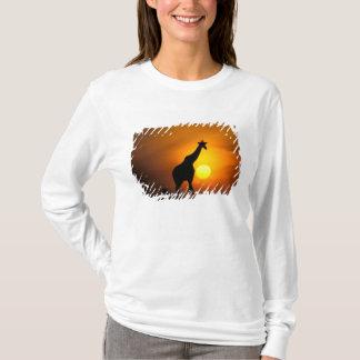 T-shirt L'Afrique, Kenya, masai Mara. Girafe (girafe