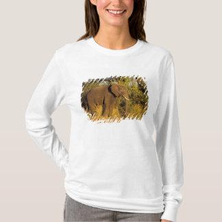 T-shirt L'Afrique, Zimbabwe, parc national des chutes