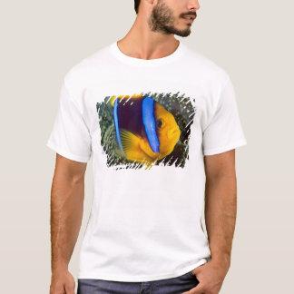 T-shirt L'Australie, la Grande barrière de corail,