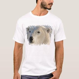 T-shirt Le Canada, Manitoba, baie de Hudson, Churchill. 7