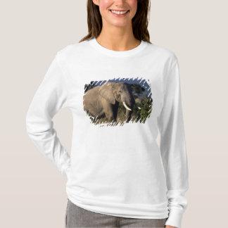 T-shirt Le Kenya : Amboseli, éléphant africain masculin