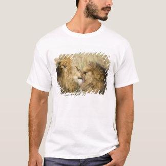 T-shirt Le Kenya, masai Mara. Plan rapproché d'un lion