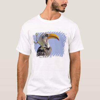 T-shirt Le Kenya. Profil d'oiseau jaune-affiché de calao