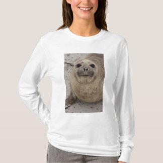 T-shirt Leonina du sud de Mirounga de joint d'éléphant)