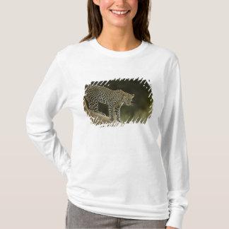 T-shirt Léopard africain, pardus de Panthera, dans un