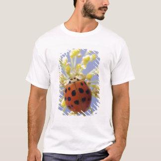 T-shirt Les Etats-Unis, la Californie, San Diego, plan