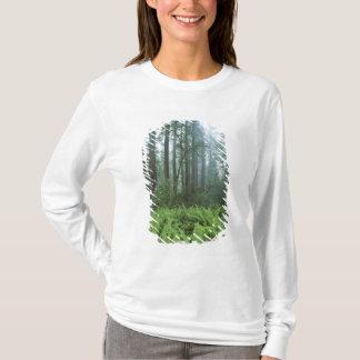 T-shirt Les Etats-Unis, la Californie, séquoia NP.