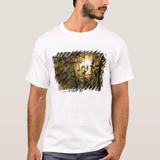 T-shirt Les Etats-Unis, la Géorgie, jardins de Callaway,