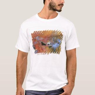 T-shirt Les Etats-Unis, New York, Adirondacks, feuille