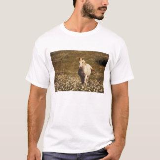 T-shirt Les Etats-Unis, Orégon. Cheval dans un domaine des