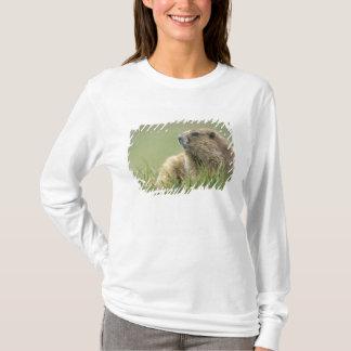 T-shirt Les Etats-Unis, Washington, NP olympique, Marmot