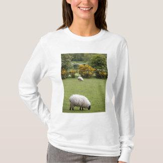 T-shirt L'Irlande occidentale, complètement tondue