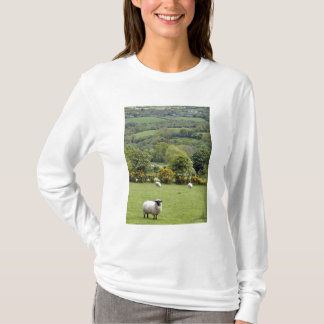 T-shirt L'Irlande occidentale, péninsule de Dingle, large