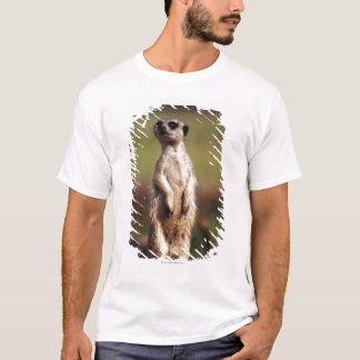 T-shirt meerkat mince-coupé la queue
