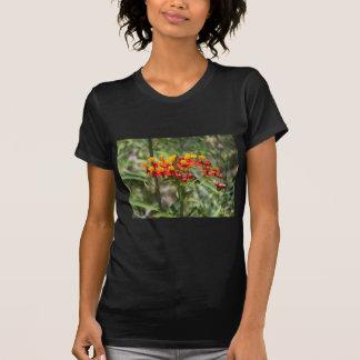 T-shirt Milkweed coloré