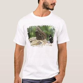T-shirt Nourriture pour des papillons