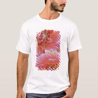 T-shirt Paires de fleurs de dahlia, espèces de dahlia,