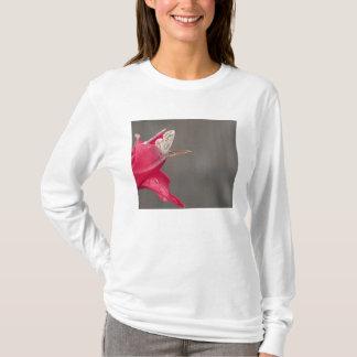 T-shirt Papillon de Brown sur un pétale rose de fleur