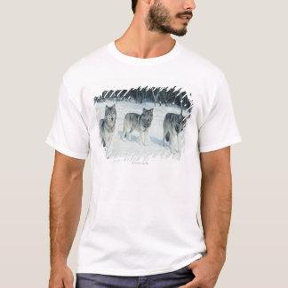 T-shirt Paquet de loups au bord de la forêt neigeuse