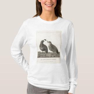 T-shirt Perdrix masculine et femelle de la Californie