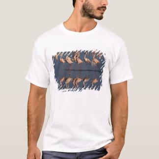 T-shirt Peu de flamants montrant, lac Nakuru