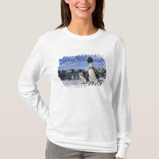 T-shirt Pingouin africain ((demersus de Spheniscus)