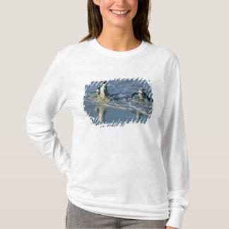 T-shirt Pingouin africain, (demersus de Spheniscus),