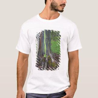 T-shirt Plan rapproché d'écorce d'arbre colorée