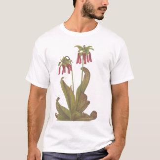 T-shirt Plante carnivore - psittacina de Sarracenia