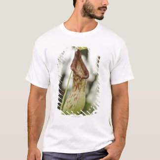 T-shirt Plante de broc carnivore