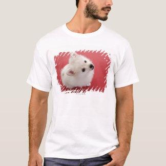 T-shirt Pomeranian sur le tapis rouge